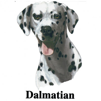 Dalmatian - Dalmatiner, Sonstige, MOTIVE P - Z, Tiere, Haustiere, ALLE MOTIVE, Tiere & Natur, TIERE, HAUSTIERE