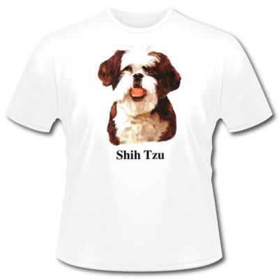 Rassehund Shi Tzu, Sonstige, MOTIVE P - Z, Tiere, Haustiere, ALLE MOTIVE, Tiere & Natur, TIERE, HAUSTIERE, Hunde