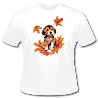 Hundemotiv: Beagle Welpe im Laub , S - Souvenir, Sonstige, Tiere, Haustiere, Welpen, Tiere & Natur, TIERE, HAUSTIERE, Hunde, Hunde