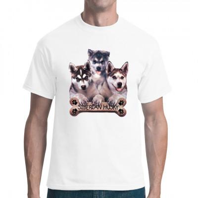 Sibirische Husky Welpen, Tiere & Natur, Hunde, Hunde