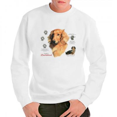 Hunde Motiv: Langhaardackel Dachshund, MOTIVE P - Z, Tiere, Tiere & Natur, Hunde, Hunde