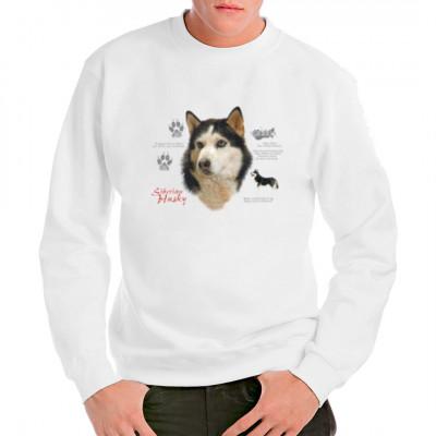 Hundemotiv: Sibirischer Husky, Tiere & Natur, Hunde, Hunde