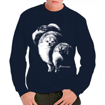 Pomeranian Kleinspitz Hund, Tiere & Natur, Hunde, Hunde