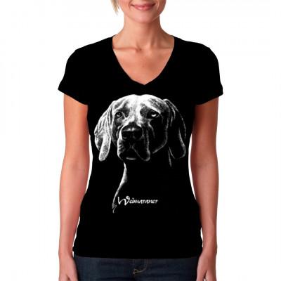 Hund: Weimaraner Rasse, MOTIVE P - Z, Tiere, ALLE MOTIVE, Tiere & Natur, TIERE, HAUSTIERE, Hunde, Hunde