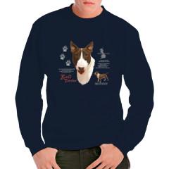 Bull Terrier Hund
