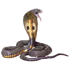 Schlangenmotiv: Kobra