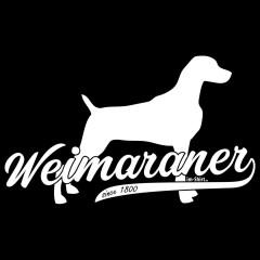 Rasse Hund: Weimaraner (weiß)