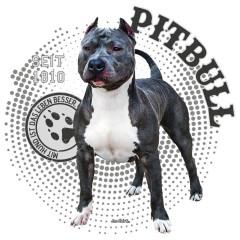 Hunde Motiv: Pitbull Foto