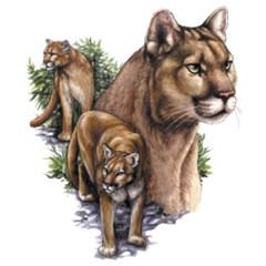 Puma Collage