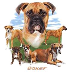 Hundemotiv: Boxer