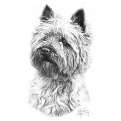 Hundemotiv: Cairn Terrier