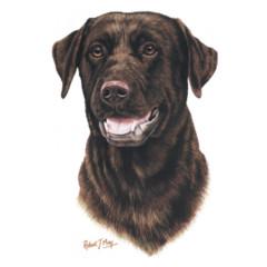 Hundemotiv: Dunkelbrauner Labrador