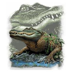 Alligator im Sumpf