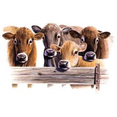 Jersey Kühe