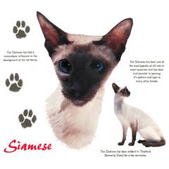 Rassekatzen: Siamkatze, Siamese