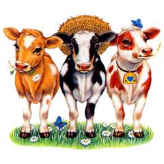 Country Kühe mit Hüten