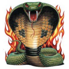 Coiled Cobra and Flames