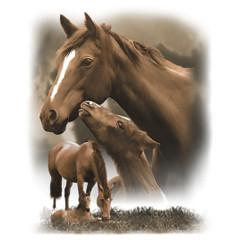 Pferdemotiv - Stute und Fohlen