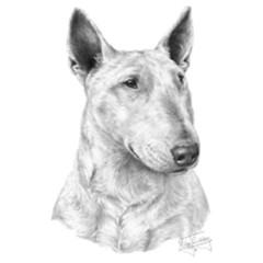 Hunde Motiv: Bull Terrier