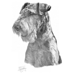 Hundemotiv: Airdale