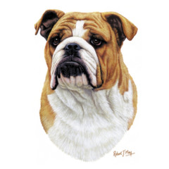 Hunde T-Shirt: Bulldogge