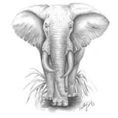 Grauer Elefant