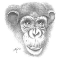 Grauer Schimpanse