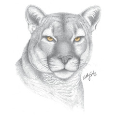 Grauer Puma Kopf