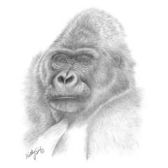 Gray Gorilla