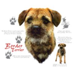 Border Terrier Hund