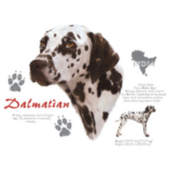 T-Shirt Dalmatiner Hund