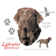 T-Shirt Labrador Retriever Braun / Chocolate Hund