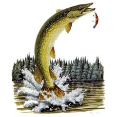 Angler-Motiv: Springender Hecht