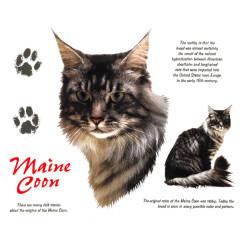 Rassekatzen: Maine Coon