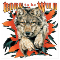 Born To Be Wild - Wolf