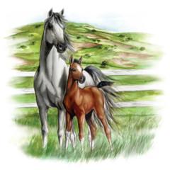 Pferdemotiv - Weißes Pferd mit braunem Fohlen