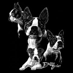 Hunde Shirt: Boston Terrier