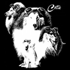 T-Shirt Collie Rassehund Hund