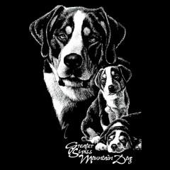 Shirt Motiv: Großer Schweizer Sennenhund