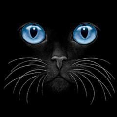 Leuchtende blaue Katzenaugen